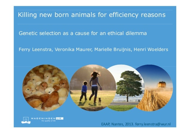 Killing new born animals for efficiency reasons Genetic selection as a cause for an ethical dilemma Ferry Leenstra, Veroni...
