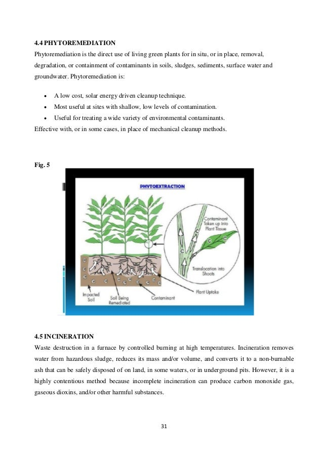 thesis to petroleum phytoremediation Phytoremediation: phytoremediation master thesis while proven to be effective in removing less dense organic petroleum products and solvents.