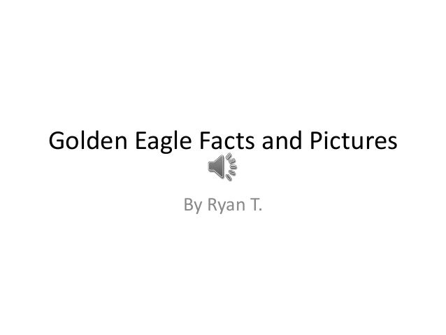 Golden Eagle Facts and Pictures           By Ryan T.