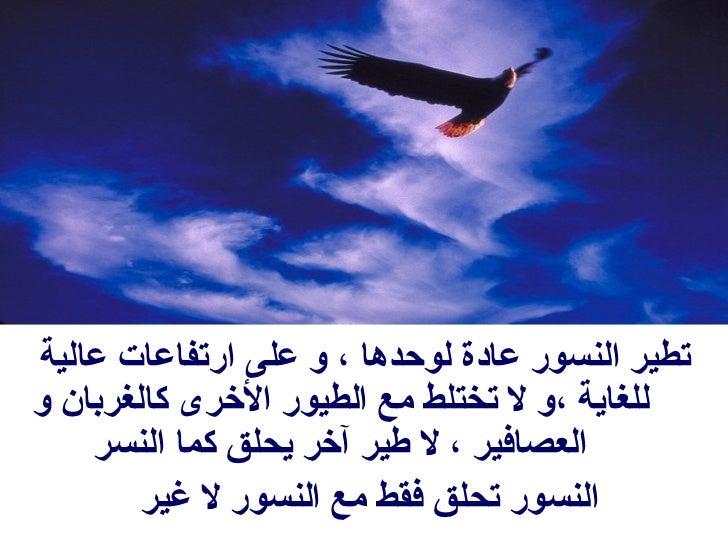 <ul><li>تطير النسور عادة لوحدها ، و على ارتفاعات عالية للغاية ،و لا تختلط مع الطيور الأخرى كالغربان و العصافير ، لا طير آخ...