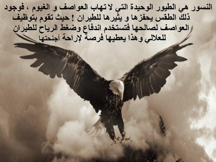 <ul><li>النسور هي الطيور الوحيدة التي لا تهاب العواصف و الغيوم ، فوجود ذلك الطقس يحفزها و يثيرها للطيران  !  حيث تقوم بتوظ...