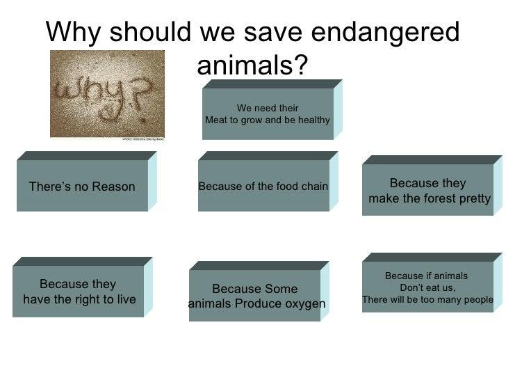 Endangered Animals Quiz