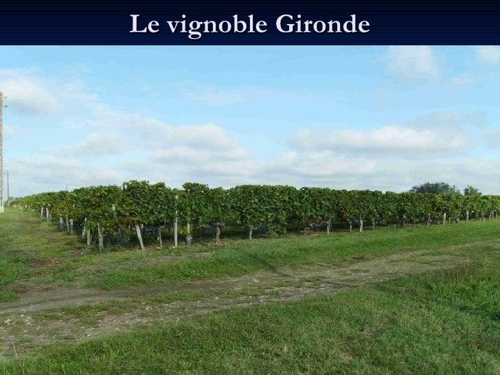 Le vignoble Gironde