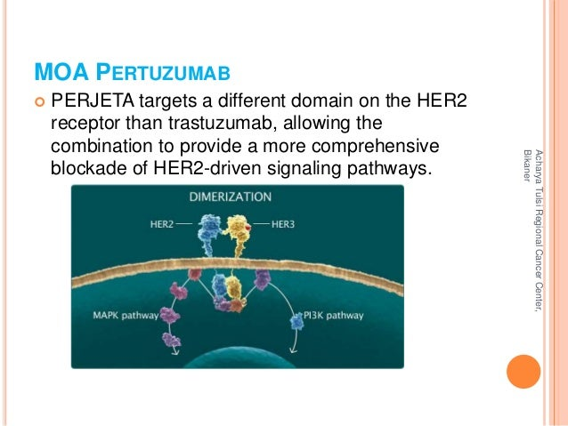 MOA PERTUZUMAB   PERJETA targets a different domain on the HER2  receptor than trastuzumab, allowing the  combination to ...