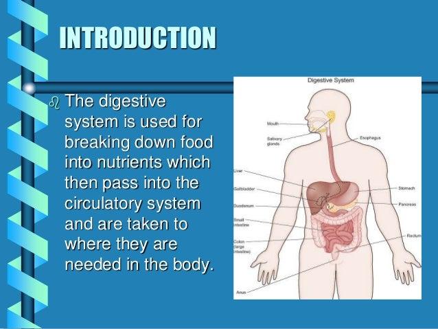 Biology Natsci 1 Digestive System
