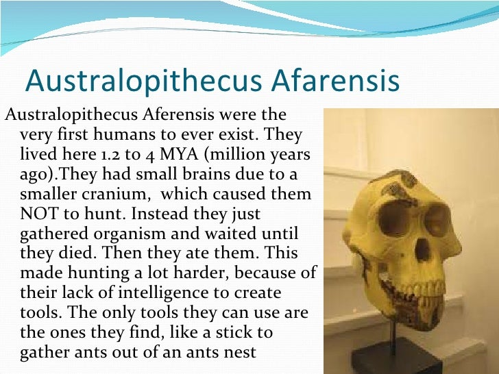 Australopithecus Afarensis <ul><li>Australopithecus Aferensis were the very first humans to ever exist. They lived here 1....