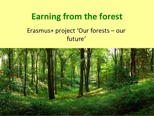 Earning from the forest Erasmus+ project 'Our forests – our future'