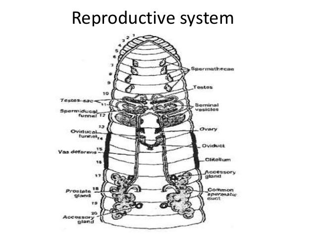 Earthworm Presentation