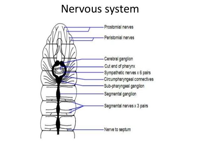 Earthworm Sense Diagram - Complete Wiring Diagrams •