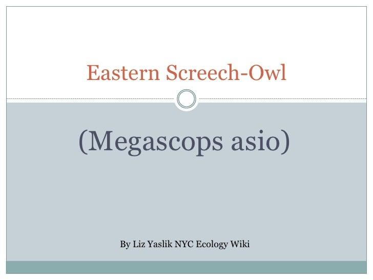 Eastern Screech-Owl   (Megascops asio)      By Liz Yaslik NYC Ecology Wiki