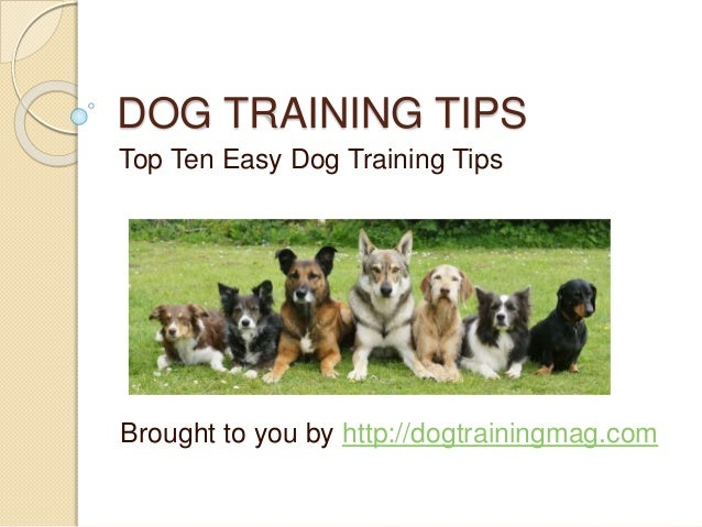 DOG TRAINING TIPS Top Ten Easy Dog Training Tips Brought to you by http://dogtrainingmag.com