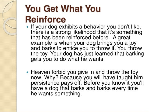 You Get What You Reinforce  If your dog exhibits a behavior you don't like, there is a strong likelihood that it's someth...