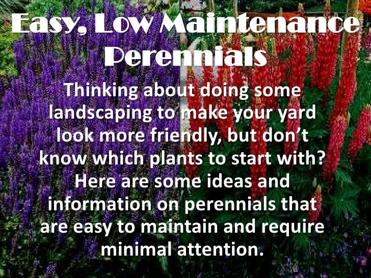 Easy, Low Maintenance       Perennials    Thinking about doing some  landscaping to make your yard   look more friendly, b...