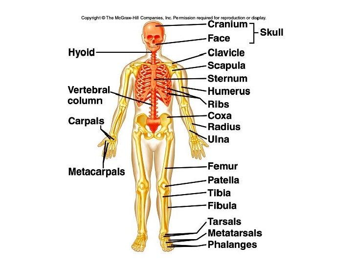 Easy skeletalsystem