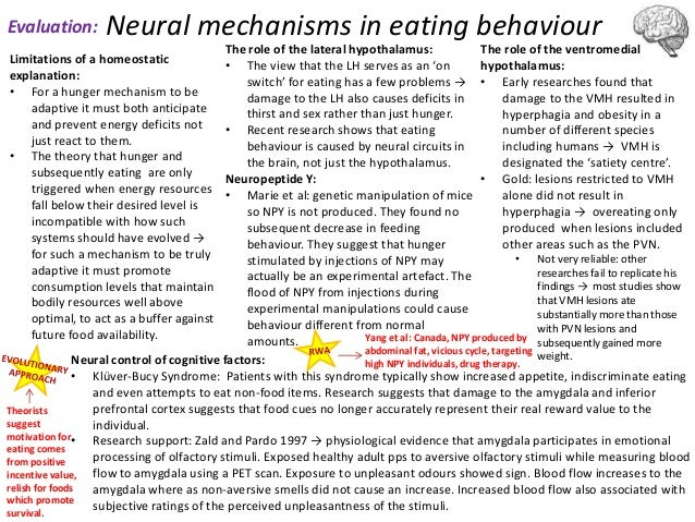 neural mechanisms in controlling eating behaviour The role of neural mechanisms the hypothalamus is a gland in the brain responsible for homeostasis homeostasis is the way in another condition homeostasis controls is our intake of food and drink, hence why some psychologists believe the hypothalamus controls our eating behaviour the lateral.