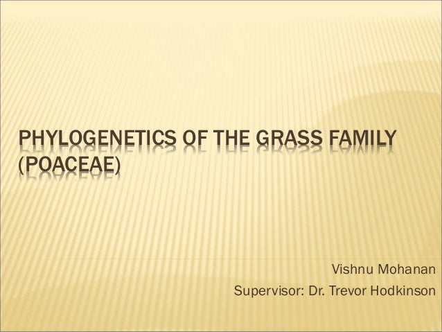PHYLOGENETICS OF THE GRASS FAMILY (POACEAE) Vishnu Mohanan Supervisor: Dr. Trevor Hodkinson