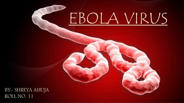 a research on the deadly virus ebola Ebola virus disease ebola viruses cause a severe and often deadly illness known as ebola virus disease (evd previously referred to as ebola hemorrhagic fever.
