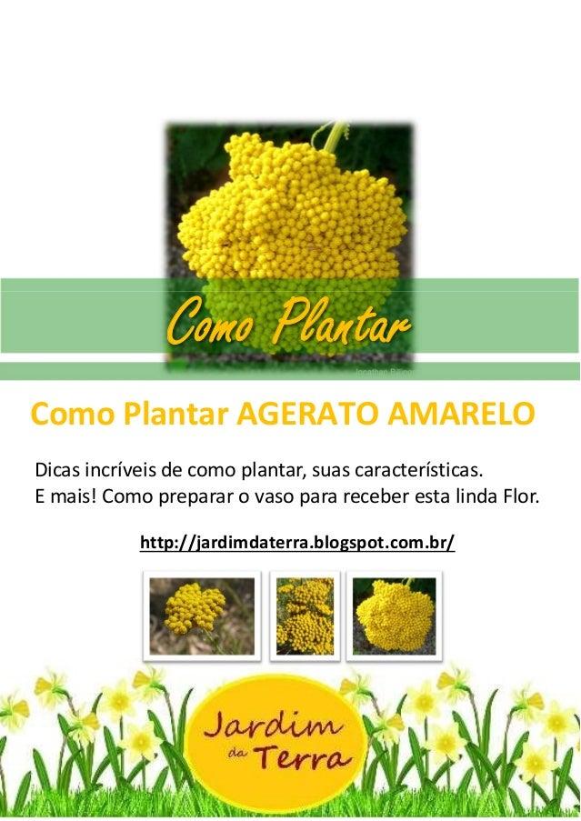 Como Plantar AGERATO AMARELO Como Plantar AGERATO AMARELO Dicas incríveis de como plantar, suas características. E mais! C...