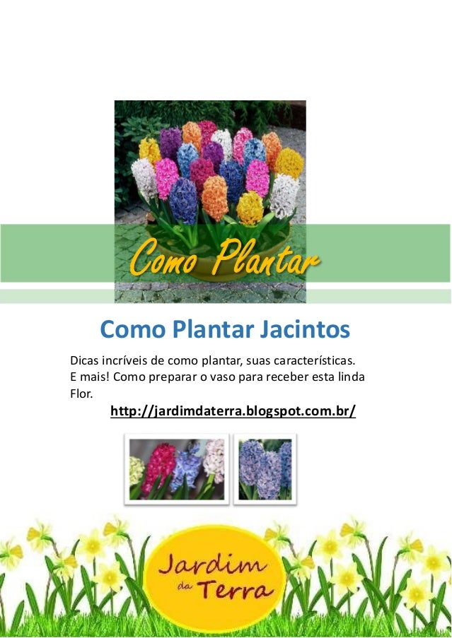 Como Plantar Jacintos http://jardimdaterra.blogspot.com.br/ Como Plantar Jacintos Dicas incríveis de como plantar, suas ca...