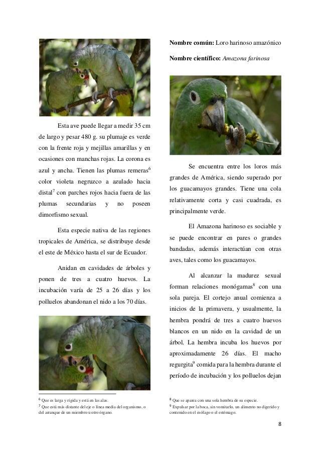 Amazona farinosa reproduccion asexual de las plantas