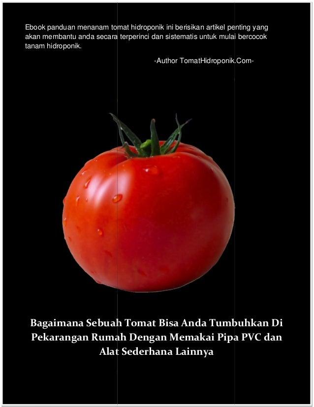 Ebook menanam tomat hidroponik ebook panduan menanam tomat hidroponik ini berisikan artikel penting yang akan membantu anda secara terperinci dan ccuart Images