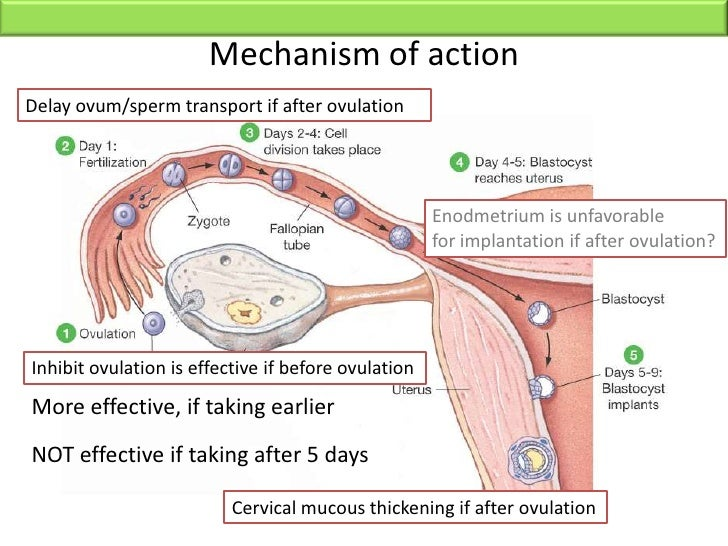 how to help implantation after ovulation