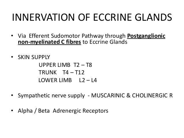 eccrine glands by aseem