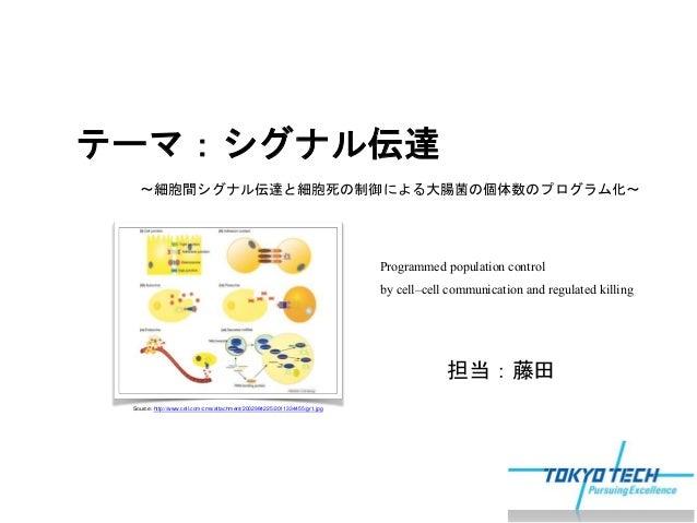 細胞間シグナル伝達と細胞死制御...