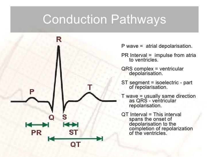 <ul><li>P wave =  atrial depolarisation. </li></ul><ul><li>PR Interval =  impulse from atria to ventricles. </li></ul><ul>...