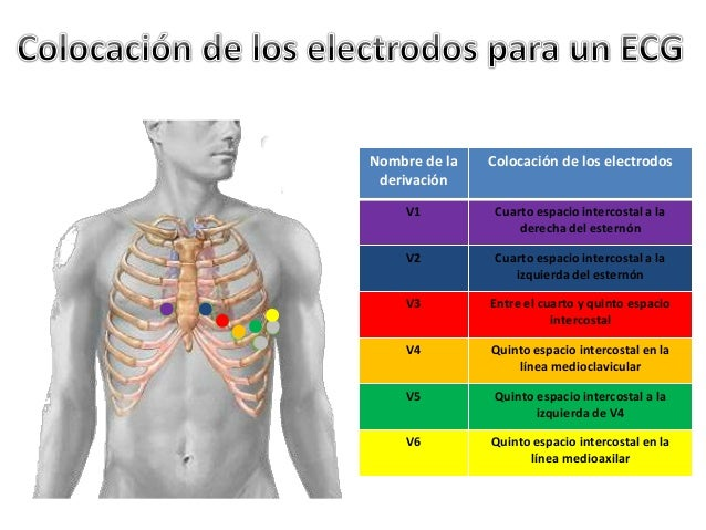 ecgfisiologiacorazon ForCuarto Espacio Intercostal