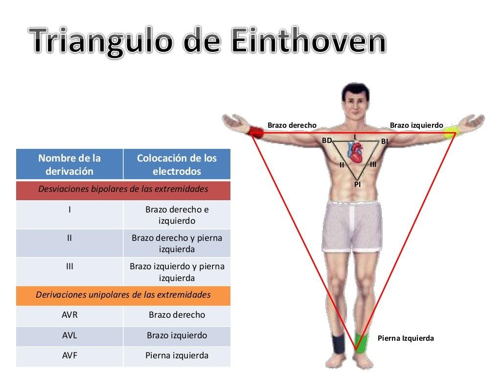 Asombroso Anatomía Del Brazo Izquierdo Ornamento - Imágenes de ...
