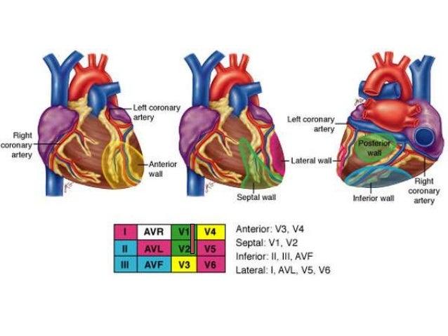 Electrocardiogaram Ecg Ekg