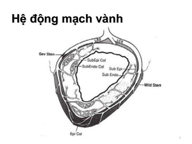 Hệ động mạch vànhHệ động mạch vành 4