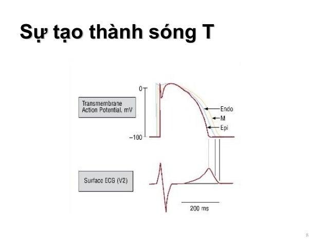 Sự tạo thành sóng TSự tạo thành sóng T 8