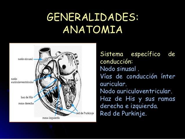 Ecg class Slide 3