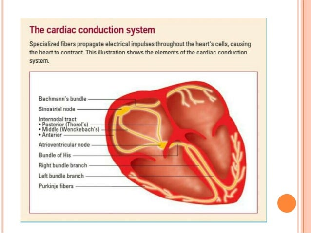 Basic of ECG and Easy Interpretation Slide 3