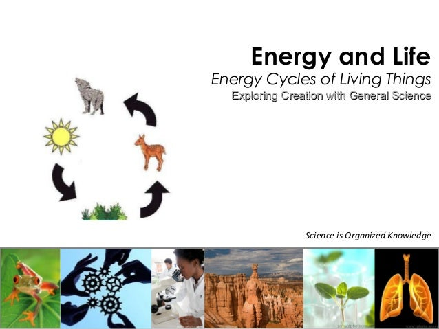Science is Organized Knowledge Energy and Life Energy Cycles of Living Things Exploring Creation with General ScienceExplo...