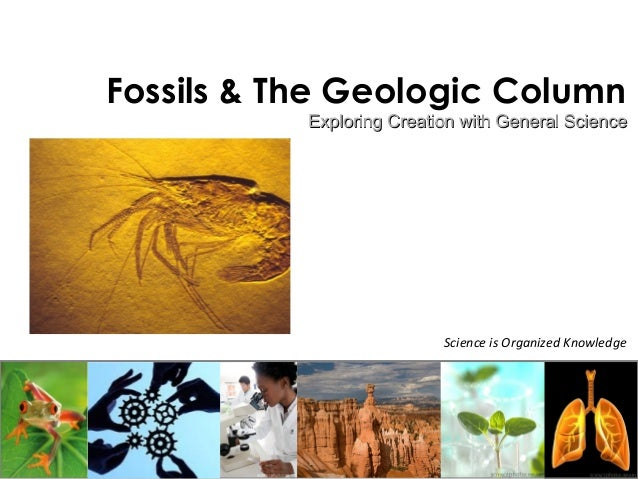 Fossils & The Geologic Column  Exploring Creation with GGeenneerraall SScciieennccee  Science is Organized Knowledge