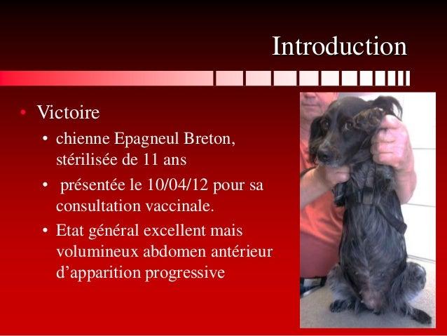 Introduction• Victoire  • chienne Epagneul Breton,    stérilisée de 11 ans  • présentée le 10/04/12 pour sa    consultatio...