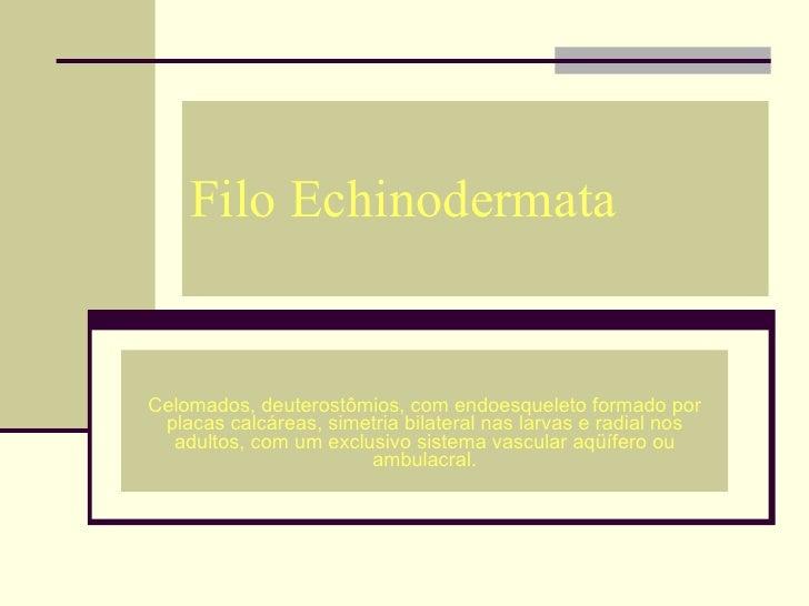 Filo Echinodermata Celomados, deuterostômios, com endoesqueleto formado por placas calcáreas, simetria bilateral nas larva...