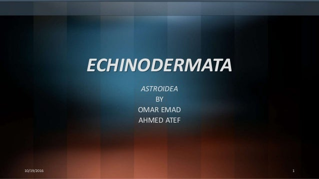 ECHINODERMATA ASTROIDEA BY OMAR EMAD AHMED ATEF 10/19/2016 1