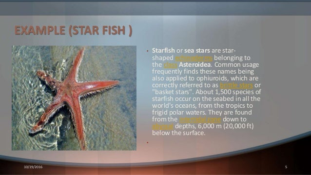EXAMPLE (STAR FISH ) • Starfish or sea stars are star- shaped echinoderms belonging to the class Asteroidea. Common usage ...
