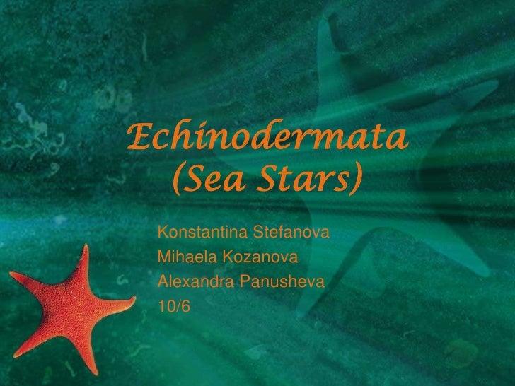 Echinodermata(Sea Stars)<br />KonstantinaStefanova<br />MihaelaKozanova<br />Alexandra Panusheva<br />10/6<br />