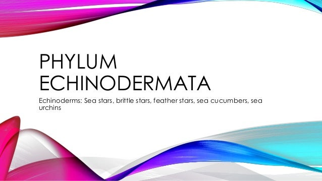 PHYLUM ECHINODERMATA Echinoderms: Sea stars, brittle stars, feather stars, sea cucumbers, sea urchins