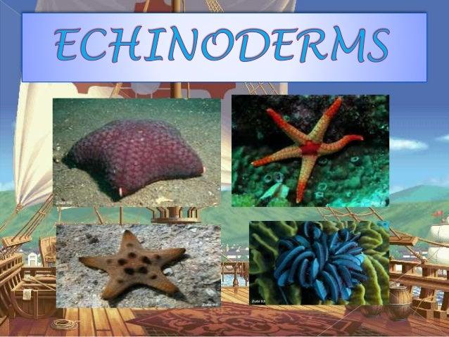 Echinoderms 1 638gcb1424925482