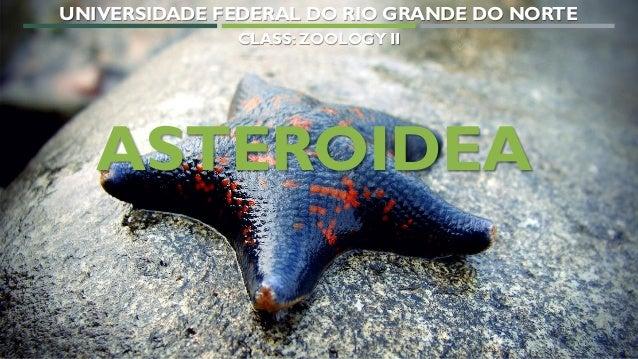 1 ASTEROIDEA UNIVERSIDADE FEDERAL DO RIO GRANDE DO NORTE CLASS: ZOOLOGY II