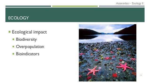 ECOLOGY  Ecological impact  Biodiversity  Overpopulation  Bioindicators 26 Asteroidea – Zoology II