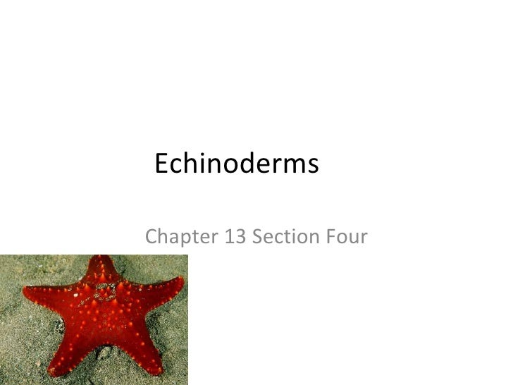 Echinoderms Chapter 13 Section Four