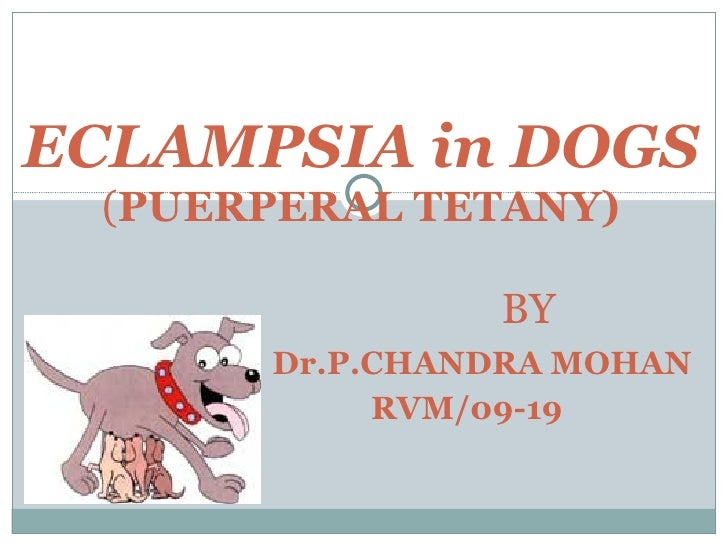 ECLAMPSIA in DOGS ( PUERPERAL TETANY)   BY   Dr.P.CHANDRA MOHAN   RVM/09-19