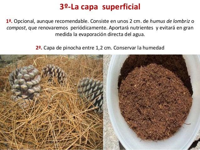 3º-La capa superficial 1ª. Opcional, aunque recomendable. Consiste en unos 2 cm. de humus de lombriz o compost, que renova...